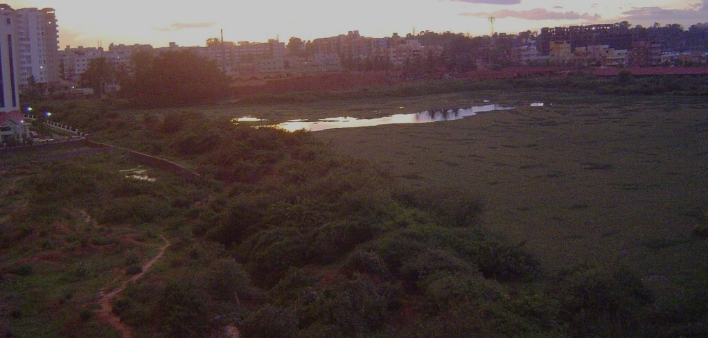 Chinnapanahalli lake covered with weed