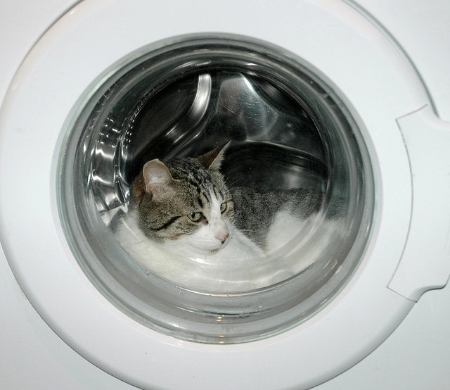 cat, washing machine, cat in a washing machine, pet proof